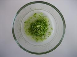 lime_juice_zest.JPG