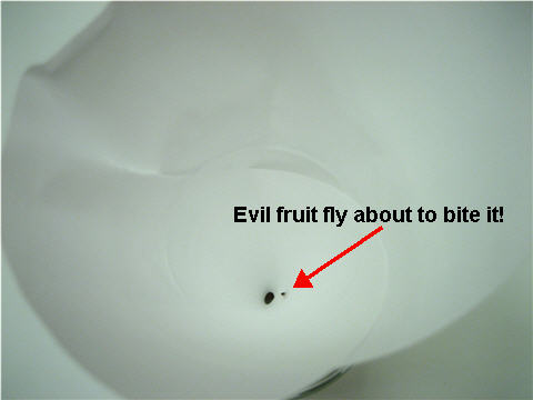 fruit_fly_trap_working1.jpg