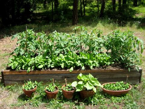 container gardening strawberries gardens