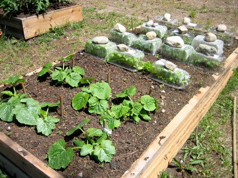 DIY: Getting Dirty with Square Foot Gardening | Squawkfox