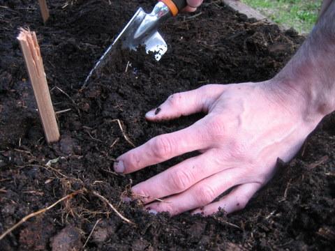 gardening planting seeds
