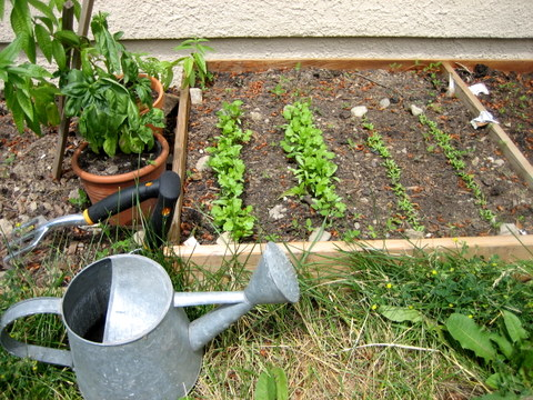 square foot gardening rows