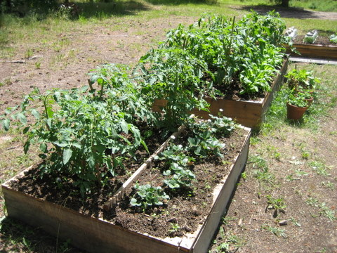 Getting Started with Square Foot Gardening Squawkfox