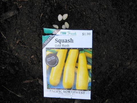 vegetable gardening yellow zucchini