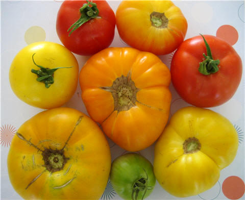 tomato heirloom brandywine black krim