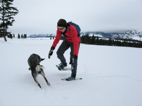 snowshoes benefits to exercise fitness dog