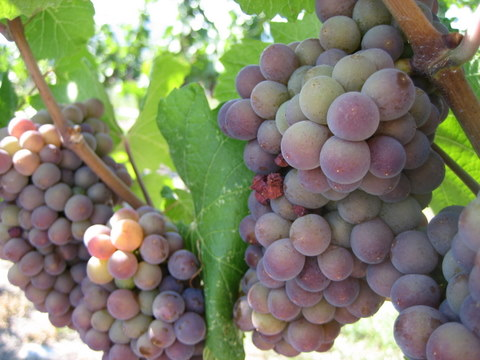 wine information wine tasting wine making