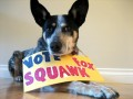 Best of the Money Blogs 2010: Vote for Squawkfox!