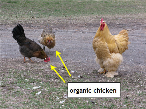 Organic Food vs Non Organic Food Non Organic Food