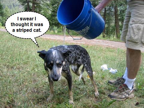 dog wash dog