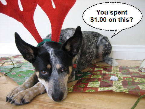 dog gifts toys