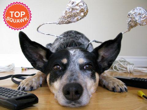 dog antenna