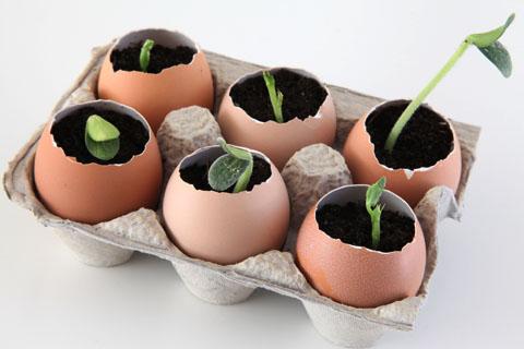 eggshell pot