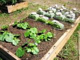 squarefoot gardening